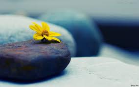 flor a pedra