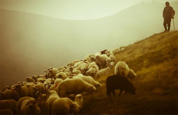 pastor-ovelhas